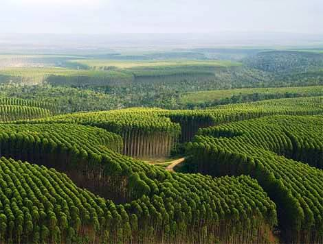 Floresta de Reflorestamento